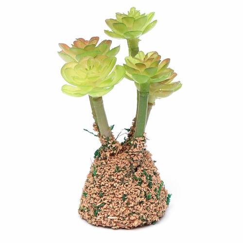 Cactus presepe assortito h reale 7 cm s3