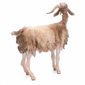 Chèvre 30 cm crèche Angela Tripi s3
