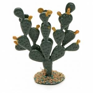 Ficus Indica pesebre s1