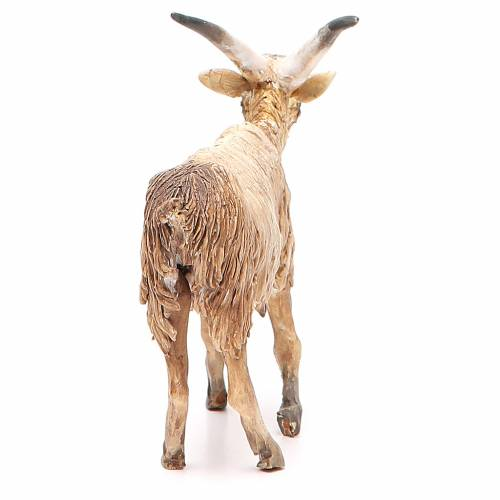 Male goat 18cm Angela Tripi s3