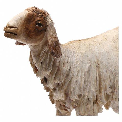 Mouton 30 cm crèche Angela Tripi s2