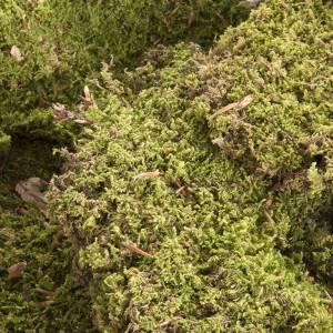 Moos, Stroh und Bäume für Krippe: Natürliches Moos für Krippe 500 Gramm