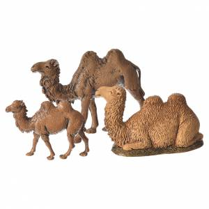 Camels, 3.5-6cm Moranduzzo collection s1