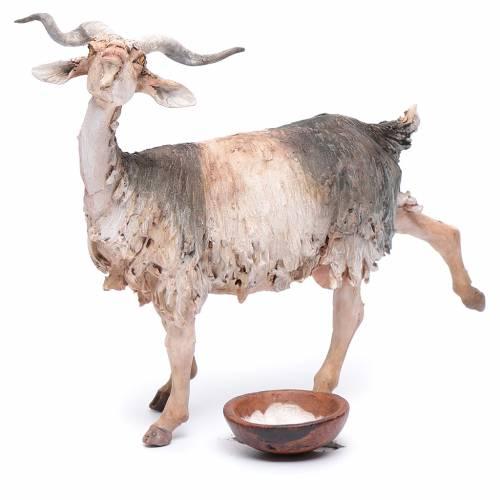 Pastor ordeñando cabra belén Angela Tripi s6