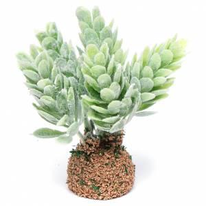 Muschio, licheni, piante, pavimentazioni: Cactus presepe assortito h reale 7 cm