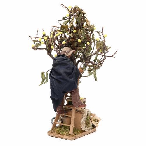 Hombre sobre escalera con árbol 14 cm movimiento belén de Nápoles s3