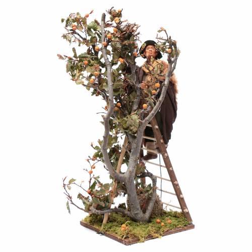 Uomo scala con albero movimento 24 cm presepe napoletano s7