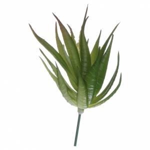 Muschio, licheni, piante, pavimentazioni: Aloe per presepe fai da te