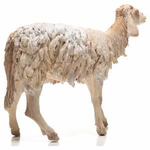 Pecorella 30 cm presepe Angela Tripi s4