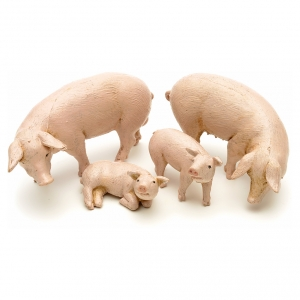 Famiglia di maiali 4 pz. Fontanini cm 12 s3