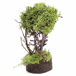 Muschio, licheni, piante, pavimentazioni: Albero di lichene per presepe h. 15 cm