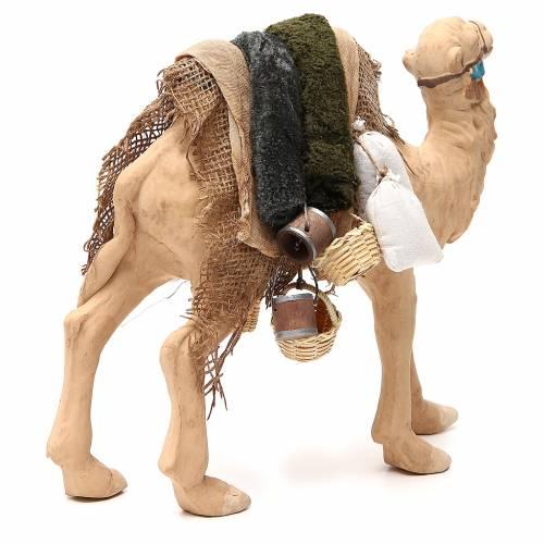 Camel with harness 24cm Neapolitan Nativity Scene s3