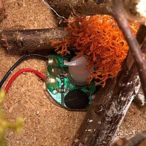 Fuoco presepe a batteria  ambientazione con palizzata 15X15X15 s3