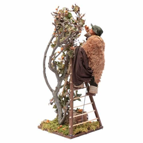 Uomo scala con albero movimento 24 cm presepe napoletano s5