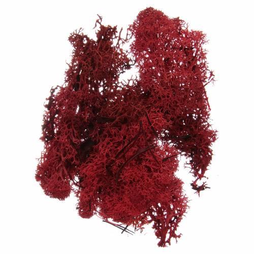 Muschio lichene rosso per presepe 100 gr s1
