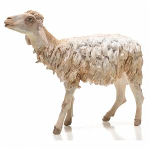 Pecorella 30 cm presepe Angela Tripi s3