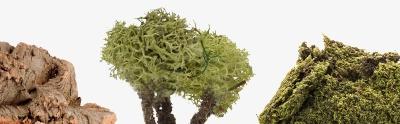 Musgo, líquenes, plantas.